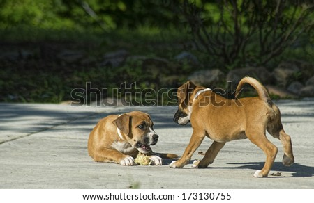 A little pup poses with a hand. - stock photo
