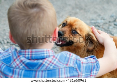 a little red dog with love looks at a child