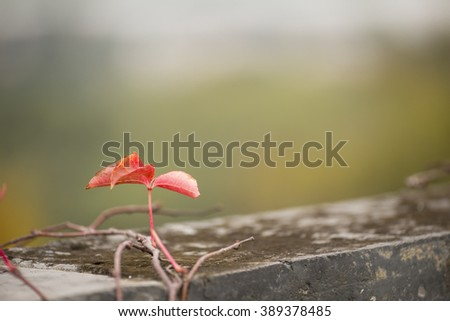A little red plant on the wall