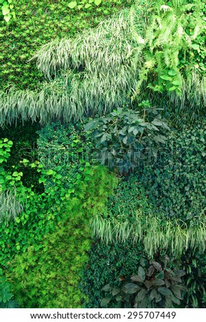 A living wall background showing lush growth of plants covering an entire wall - stock photo