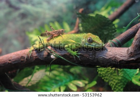 A lizard is is at rest. - stock photo