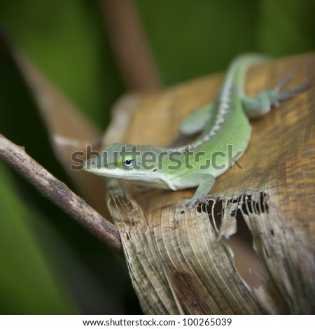A lizard on an agave leaf