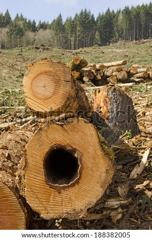 A load of logs await the loader or forestry machine loads a log truck at the site landing - stock photo