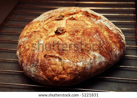 A loaf of hot, crisp artisan bread right out of the oven.