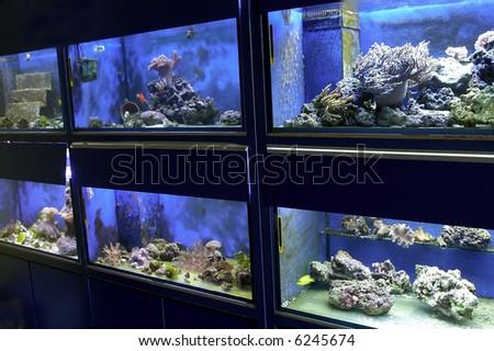 A locol Aquarium with fish/coral - stock photo