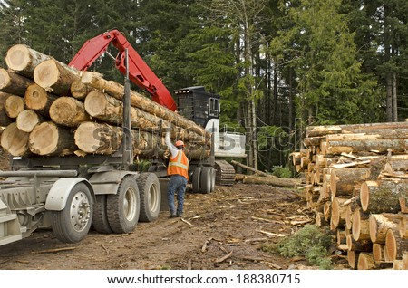 A log loader or forestry machine loads a log truck at the site landing with the driver securing the load in southern Oregon - stock photo
