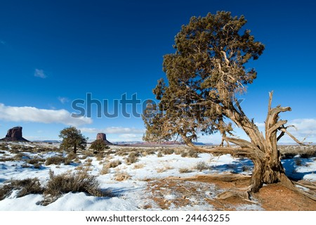 A lone broken tree in Monument Valley - stock photo