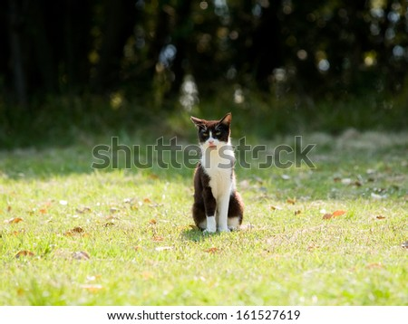 A lone cat sitting on a field of grass. - stock photo