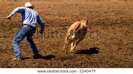 A lone cowboy lassos a calf during a rodeo. - stock photo