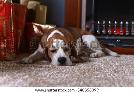 A lone dog on the carpet with Christmas gifts in front of the fireplace in an empty room