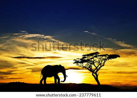 a lone elephant africa - stock photo