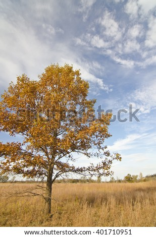 A lone Oak tree sits among the prairie grasses at the West Beach unit of Indiana Dunes National Lakeshore in Porter County, Indiana - stock photo