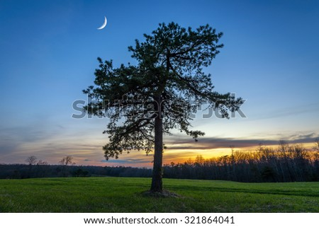 A lone pine tree and crescent moon at twilight from Hensley Settlement in the Cumberland Gap National Park. - stock photo