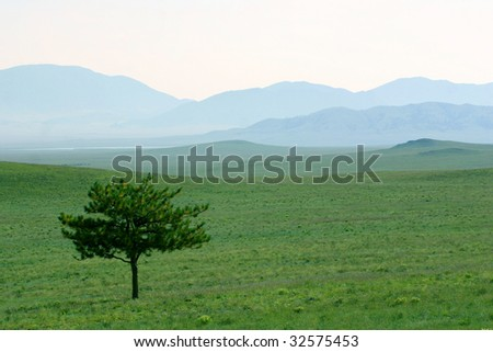 A lone pine tree stands vigil over a mystical landscape of green grass and magical blue hills shrouded in mist - stock photo
