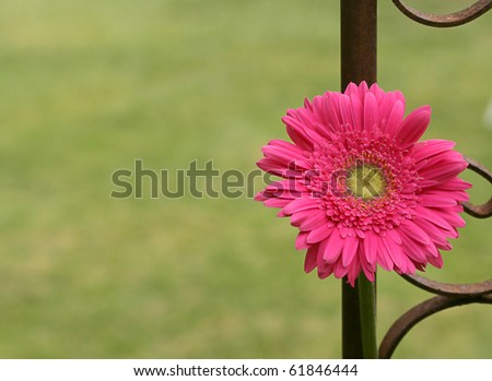 A lone pink flower growing by an iron fence.