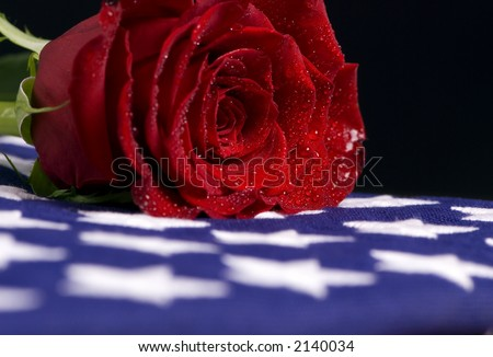 A lone red rose sheds tears for the a fallen love one - stock photo