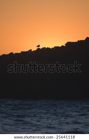 A lone seagull is isolated by the setting sun on a beautiful Pacific Northwest coast - stock photo
