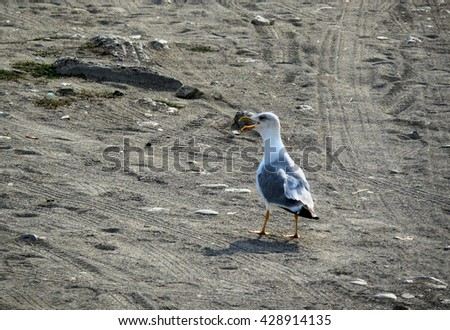 A lone seagull stands on the sand under bright sunlight                    - stock photo