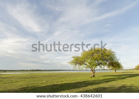 A lone tree and green field landscape blue sky back ground - stock photo