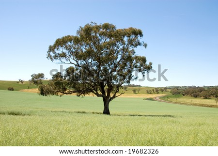 A lone tree in a paddock, on a farm in South-Western New South Wales, Australia - stock photo