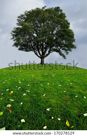 A lone tree on a top of a green hill on a cloudy day - stock photo
