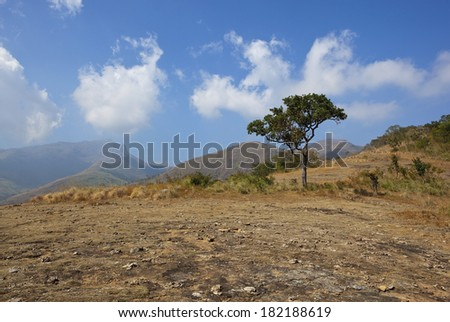 a lone tree on the top of a hilly landscape in the kodaikanal region of tamil nadu south india under a blue sky with fluffy clouds - stock photo