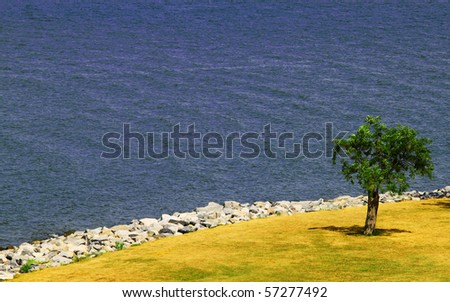 a lone tree on the york river shoreline in virginia with room for your text - stock photo