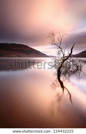 A lone tree partially submerged and reflecting on the water of Loch Lomond, Scotland - stock photo