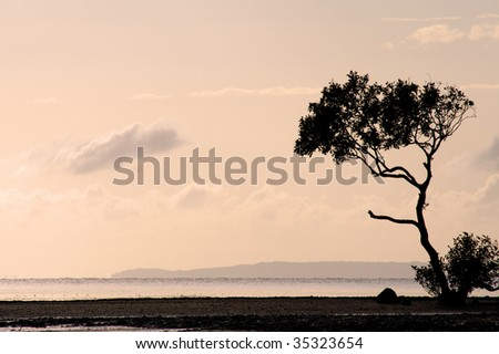 A lone tree silhouetted against the dawn light - stock photo