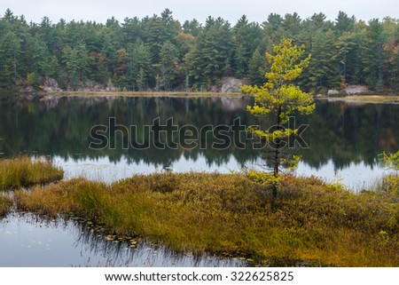 A lonely fall tree on a small island in a lake at Killarney, Ontario, Canada - stock photo