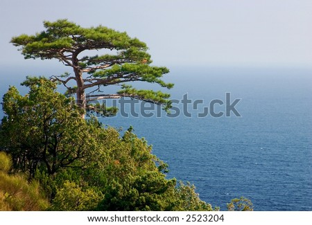 A lonely pine on  Black sea background