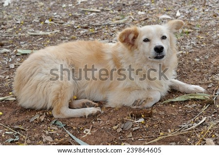 a lonely roadside dog in thailand  - stock photo