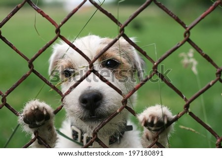 A lonely sad dog behind wire fence, freedom on the other side - stock photo