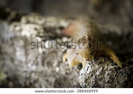 A lonely Squirrel in cave