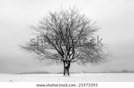 A lonely tree in a winter scene - stock photo