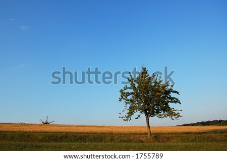 A  lonely tree in the field