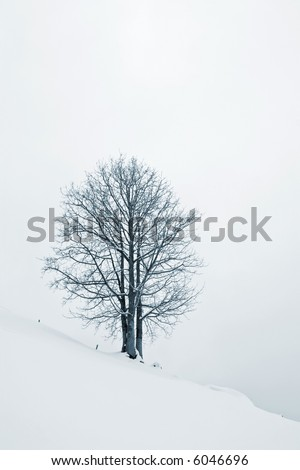 A lonely tree, on a snow field, with mist.