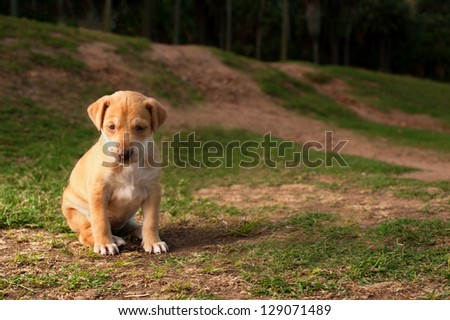 A lonely young puppy dog is left alone to fend for itself. - stock photo