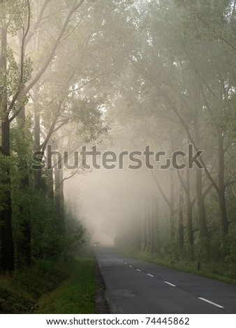 A long avenue of trees along the road. - stock photo