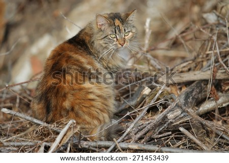 A Long Haired Feral Cat Sitting Outside Enjoying the Warm Sun - stock photo