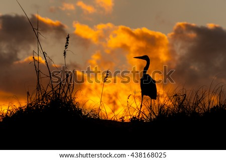 A long-legged, tall Blue Heron stands on the dune of a beach in Texas at sunset silhouetted against the sky.