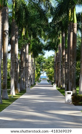 A long pathway through some tropical trees. - stock photo