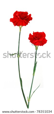 A long red carnations - stock photo