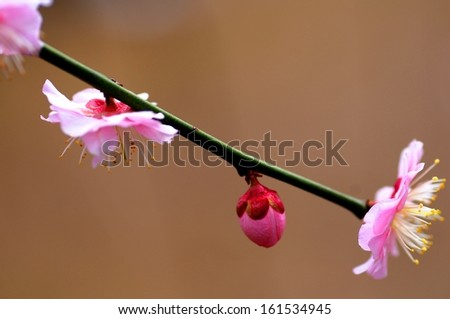 A long stem with little pink flowers on it. - stock photo