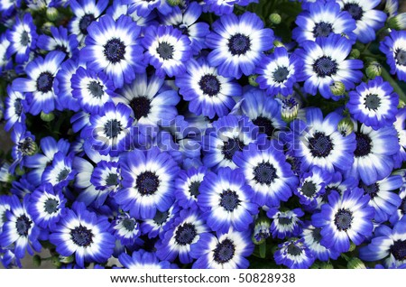 A Lot Of Beautiful Blue Flowers Background