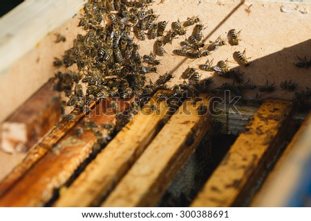 A lot of bees on beehive with wooden frames of honeycomb inside, on sunny day close up - stock photo