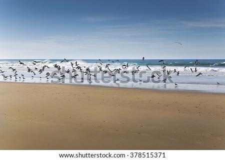 A lot of birds on a beach of Atlantic ocean - stock photo