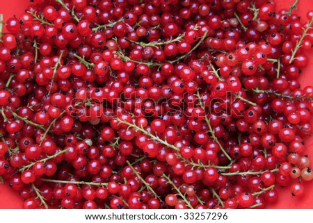 A lot of branches of the red currant