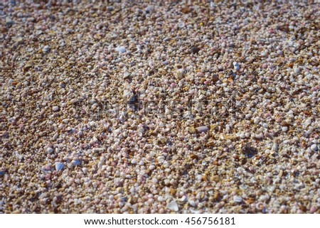 a lot of broken small corals, scrap of sea shell on the sand,filtered image,selective focus - stock photo