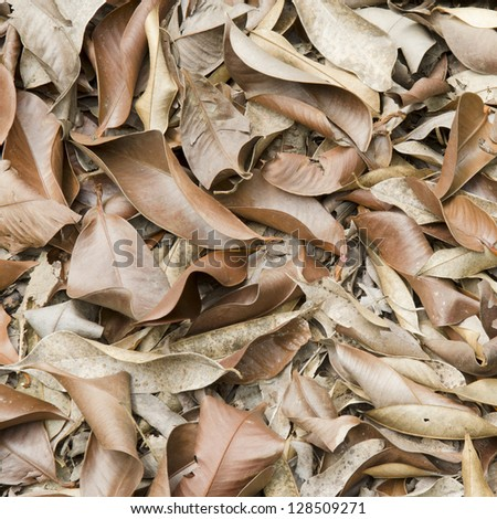 A lot of dry leaves lying on the ground